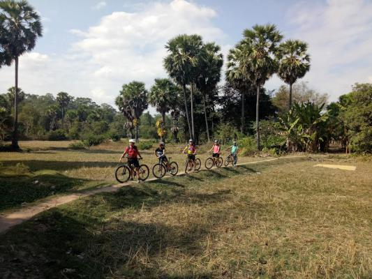 Rice Paddies Cambodia, Angkor Cycling Tour